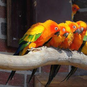 How Much Is a Parrot to Cost in 2021?