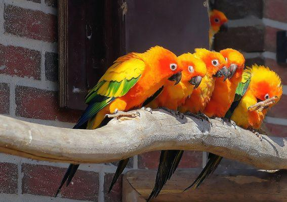 how much is a parrot to cost in 2020?