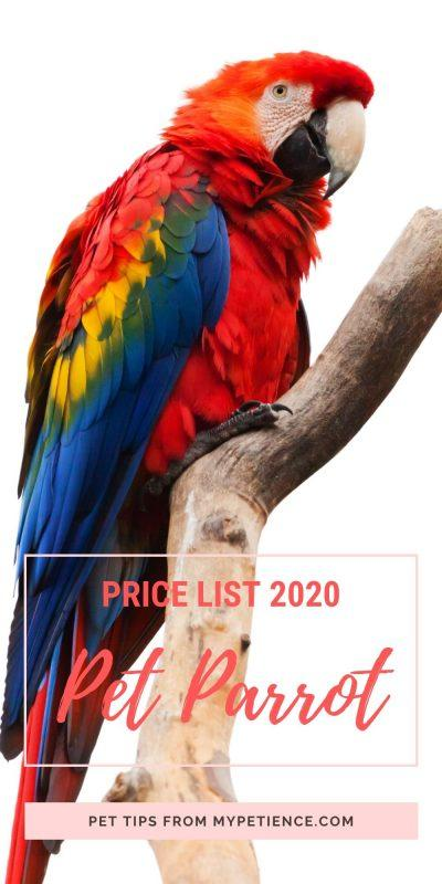 how much is a pet parrot to cost in 2020?