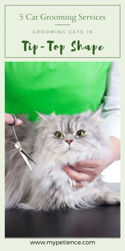 A cat can pretty much take care of themselves, but it should not stop a cat owner like you from taking your pet cats to a cat grooming salon for grooming cats in professional way.