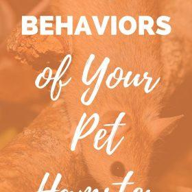 Understand the behavior of your pet hamster.