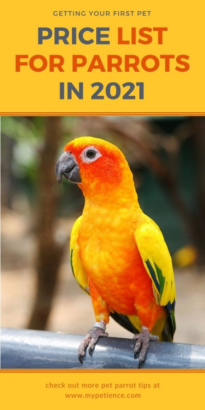 How much is a parrot to cost? Prices to own a pet parrot.