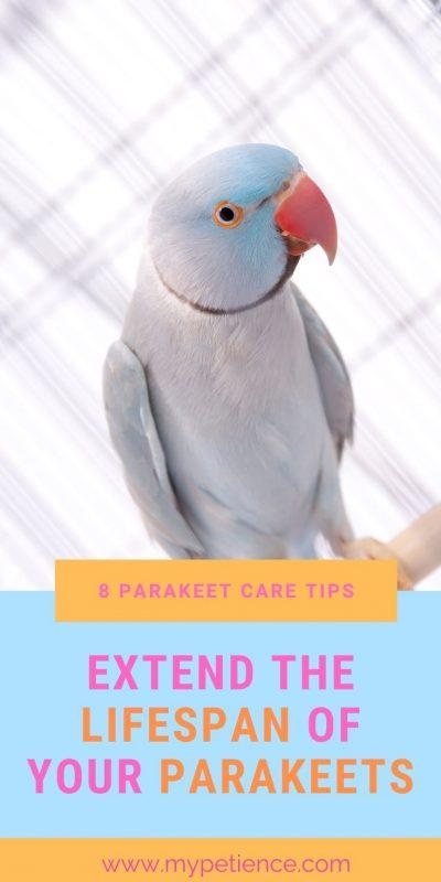 A proper parakeet care is important to prolong the lifespan of parakeets.