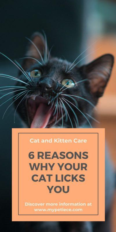 why does my cat lick my hair, what does it mean when a cat licks you? It's an important part for cat and kitten care.