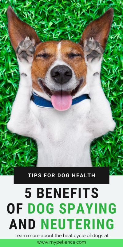 Do dogs go through menopause? What are the effects of the dogs' heat cycle on dog health? You can prevent your dog from getting pregnant by dog spaying and neutering. It's a part of the dog care and you need to understand this safe surgical procedure can increase the lifespan of your puppy. We will discover the benefits of neutering dogs, and do neutered dogs go through menopause-like symptoms after spayed in this post. #dogspaying #doghealth #dogcare #neutereddog #benefitsofneuteringdogs