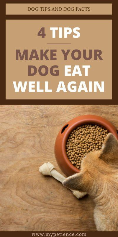 How long can a dog go without food and eating? Let's find out the dog tips and dog facts for this issue.