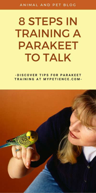 Parakeet training is a must to train a parakeet to talk.