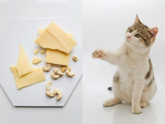 Can Cats Eat Cheese, Can cats eat rice, Can cats eat bread, Can cats eat tuna