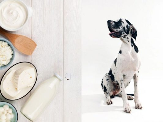 Is yogurt good for dogs, Can dogs eat yogurt