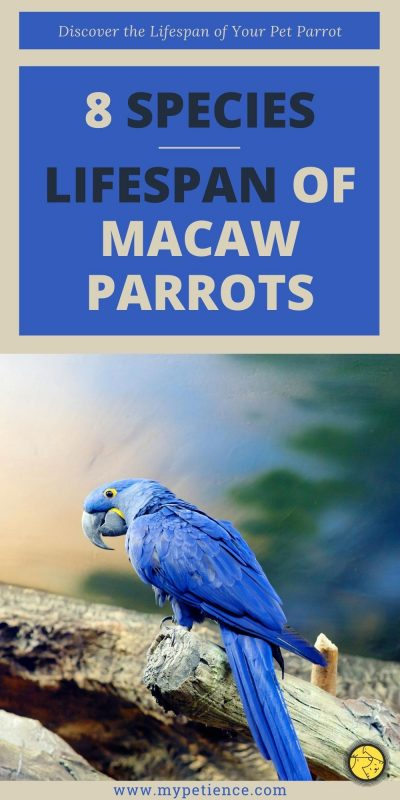 Let's discover macaw parrots' lifespan that you might not know.