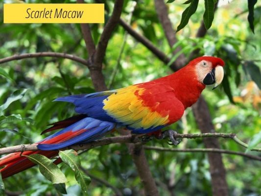Macaws' Lifespan