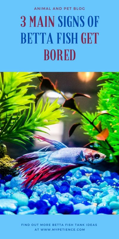 Here are some betta fish tank ideas to solve the boredom of betta fish.