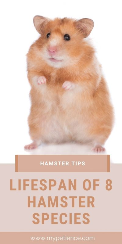 Let us discover the hamster tips about a hamster's lifespan.