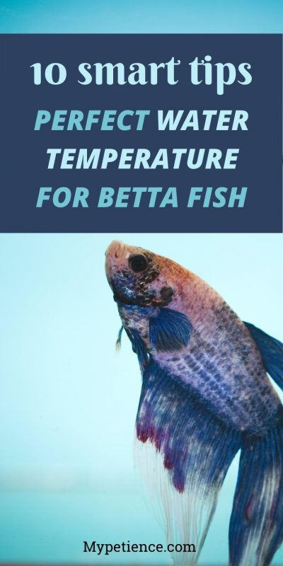 10 tips on setting the ideal water temperature for betta fish tank.