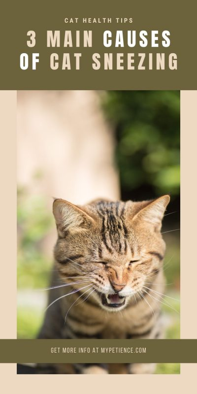 Cat health tips for what to do if the cat sneezes non-stop.