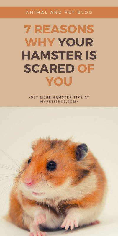 how to take care of a scared hamster is a part of hamster care.