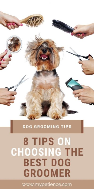 Read some advice on this post then you can get the best dog groomers and dog grooming salons to service your dog.