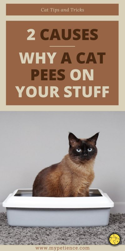 We will discover cat tips and tricks to prevent a cat keep peeing on your stuff
