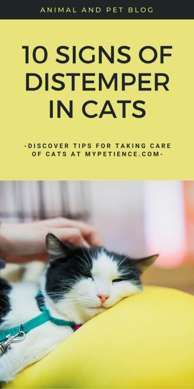 There are 10 symptoms of distempers in cats in this post.