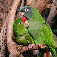 How Long Do Parrots Live as Pets and in the Wild?